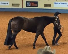 Tail Extension 1lb DRK MIX by KATHY/'S TAILS NEW Free Bag AQHA APHA PtHA FEI USDF
