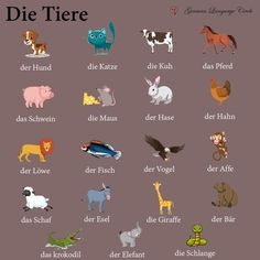 Come and Learn German with us! The Animals, German Grammar, German Words, Spanish Activities, Teaching Spanish, Teaching French, French Lessons, Spanish Lessons, Deutsch Language