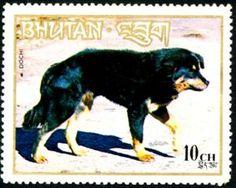 Dochi (Canis lupus familiaris)