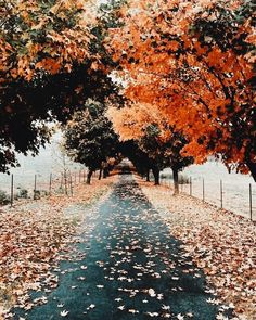 Discovered by Naz. Find images and videos about aesthetic, nature and autumn on We Heart It - the app to get lost in what you love. Beautiful Places, Beautiful Pictures, Autumn Aesthetic, Autumn Inspiration, Happy Fall, Fall Halloween, Autumn Leaves, Autumn Trees, Scenery
