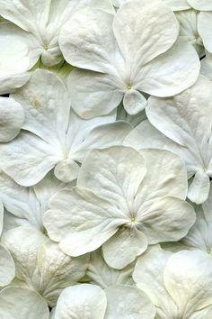shades of white | via High-Impact Design ~ Cityhaüs Design