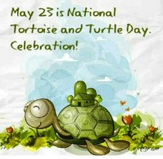 May 23 National Tortoise & Turtle Day Turtle Time, Pet Turtle, Turtle Pond, Sulcata Tortoise, Russian Tortoise, Tortoise Turtle, Tortoise Care, Cute Turtles, Baby Turtles