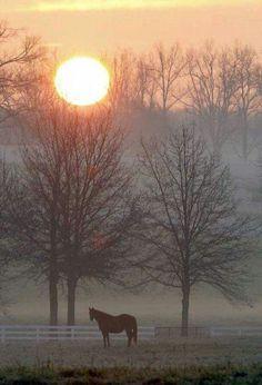 From I Love Lexington, KY : Calumet Farm sunrise.