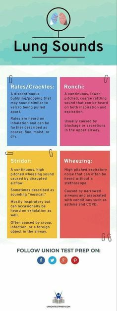 Are you a nursing, PA, or med student learning how to listen to breath sounds? Find out the subtle differences between each type of lung sound here! Nursing Cheat Sheet, Nursing Tips, Nursing Programs, Lpn Programs, Lpn Nursing, Med Surg Nursing, Funny Nursing, Nursing Assessment, Nursing Mnemonics