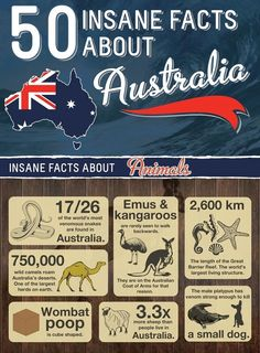 50 insane facts about Australia South Australia, Western Australia, Australia Travel, Australia Honeymoon, Australia Living, Wombat, Facts About Australia, Australian Animals, Australian Phrases