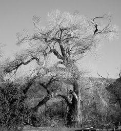 Tree in Sedona