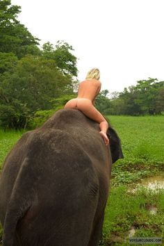That Nude women and elephants consider