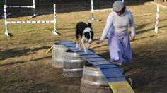 DIY Beginner dog walk and jumps for agility course.