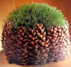 Simple but striking. Glue pine cones tightly together around a shallow bowl. Then plant finely bladed grass or baby's breath inside.