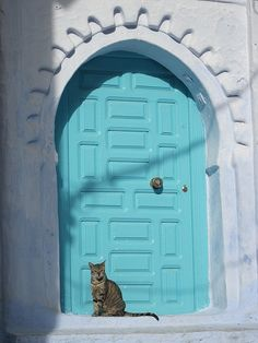 Cat by the door, Chefchaouen - Morocco........THIS LOVELY CAT MEOWED TO ME - BUT, NOT UNDERSTANDING MOROCCAN, I DIDN'T KNOW WHAT HE SAID ---- SO, I JUST PETTED HIM & SMILED..........ccp
