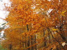 Herbstspaziergang im Pfälzer Wald.