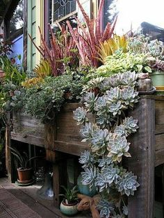 Bromeliads, Succulents, and Herbs. Bromeliads, Succulents, and Herbs. Hanging Succulents, Succulents In Containers, Cacti And Succulents, Container Plants, Cactus Plants, Container Gardening, Succulent Display, Succulent Ideas, Planter Boxes