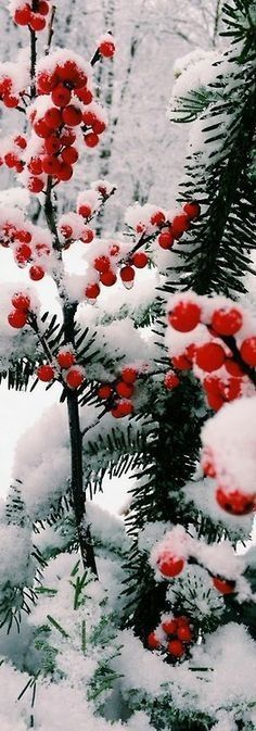 Touch of red in White wonderland! #Whitewinter #ManteauxManteaux #Color #red