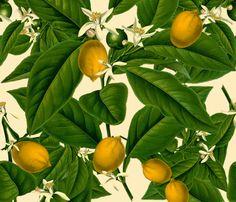 Lemon Botanical ~ Trianon Cream fabric by peacoquettedesigns on Spoonflower - custom fabric