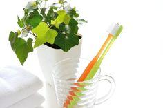 helecho baño Plantes Feng Shui, Minimalist Home, Bonsai, Barware, Flora, Plants, Sim, Alice, Gardening
