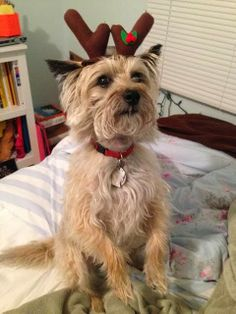 Col. Potter Cairn Rescue Network: Sunday Sweets Emme the ReinCairn