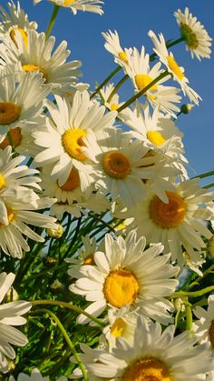 What's sweeter than a daisy :) Happy Flowers, Flowers Nature, My Flower, Flower Power, Wild Flowers, Beautiful Flowers, Sun Flowers, Beautiful Gorgeous, Simply Beautiful