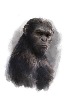 Cesar! #planetoftheapes by Hans