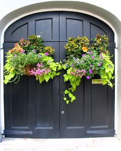 Charleston doors  window boxes