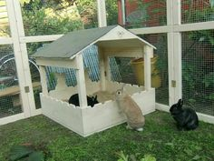 Bunny house                                                                                                                                                                                 More