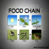 Food Chain Collage