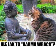 Ale jak to karma wraca? Kot rozmawia z rzeźbą posągiem buddy