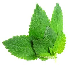 5 herbs to cure insomia- lemon balm