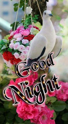 Good Night All, Sweet Night, Good Night Sweet Dreams, Good Night Image, Good Night Prayer Quotes, Good Knight, Evening Quotes, Goeie Nag, Good Afternoon