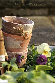 Clay pots for spring flowers. Love old pots. Terracota, Deco Floral, Colorful Roses, My Secret Garden, Clay Pots, Garden Pots, Garden Sheds, Dream Garden, Pansies