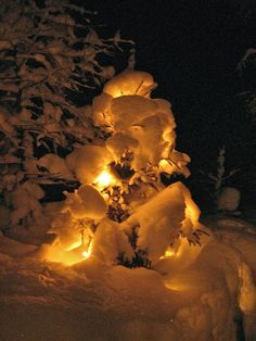 Christmas tree covered by snow in Harsa , Sweden