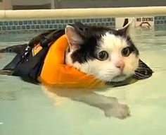 Hidroterapia para seu gato sem sair de casa! Vet Terapias atendimento domiciliar para cães e gatos em São Paulo e ABC! Dra Flávia Oliva  Médica veterinária  www.vetterapias.com.br  contato@vetterapias.com.br
