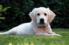 La clasificación definitiva de razas de perros