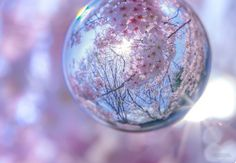 Cherry blossoms in the glass ball ( photo by Kagaya ) Outdoor Photography, Creative Photography, Art Photography, Reflection Photography, Beautiful Nature Wallpaper, Beautiful Flowers, Fairy Lights Photos, Pics For Dp, A Kind Of Magic