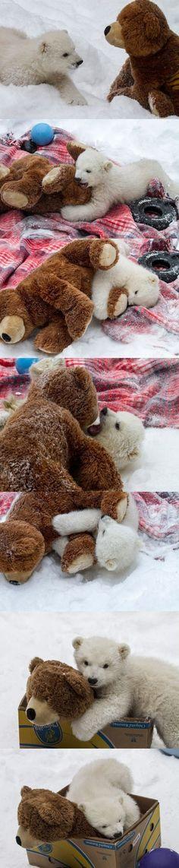 baby polar bear meets a friend.@Casey Dalene Sue omg