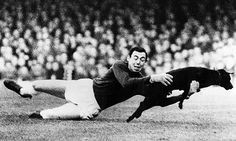 Gordon Banks, Leicester City goalkeeper catching a dog that had run onto the pitch mid game. 1965