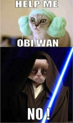 Grumpy cat won't help anybody...