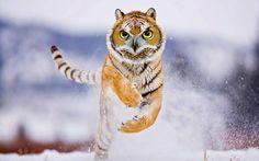 30 Times Animals Turned Into Strange Hybrid Creatures In Photoshop Bizarre Animals, Rare Animals, Funny Animals, Odd Animals, Photoshopped Animals, Animal Mashups, Bird Hunter, Surreal Photos, Tiger Art