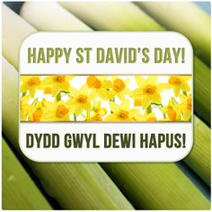 Happy St David's Day from GoneDigging