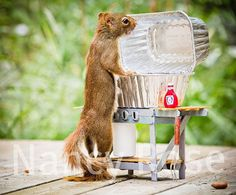 10694_06 http://www.amusingplanet.com/2013/02/nancy-rose-adorable-squirrels.html