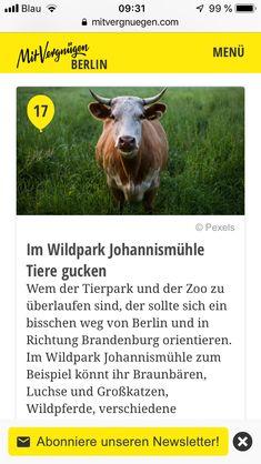 Berlin, Park, Animals, Lynx, Brandenburg, Animales, Animaux, Parks, Animais