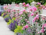 Get tips on how to combine plants into a pleasing arrangement in your garden in this gallery on HGTV Gardens.