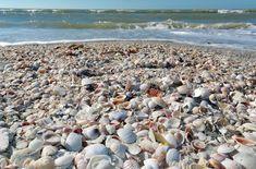 Sanibel Island, Florida    www.liberatingdivineconsciousness.com