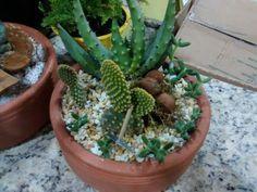 Mini Jardim Cactus