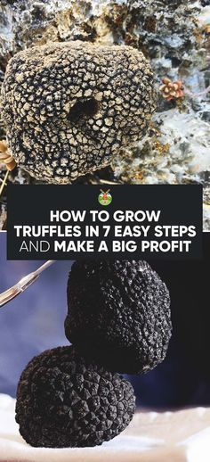 How to Grow Truffles in 7 Easy Steps and Make a Big Profit #howtogrowmushrooms