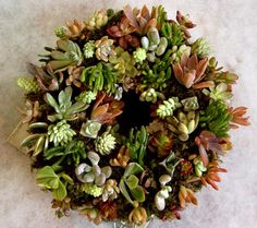 Wreaths made with succulent plants
