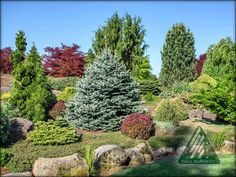 The Amazing World of Conifers Evergreen Garden, Stepping Stones, Yard, Amazing, Outdoor Decor, Garden Ideas, Plants, Miniature, Pictures