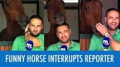 Horse Stops Reporter News Blooper ☆ Funny Animals Blooper