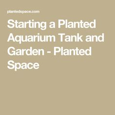 Starting a Planted Aquarium Tank and Garden - Planted Space