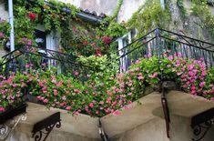 balcony plants1