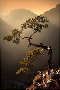 Picture of tree and mountain